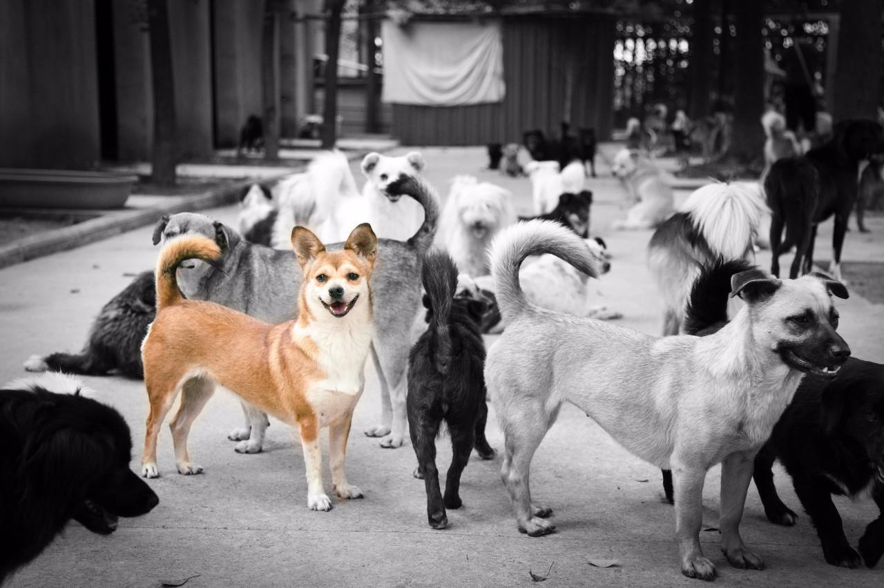 #爱心文峰# | 20只狗狗领养爱心起航,我们在文峰都会广场等你!