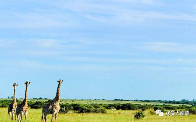不懂英文,一个六十岁南通人独自去非洲,他的经历让人…