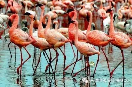 近万只动物要来南通?南通森林动物园预计明年10月对外开放!