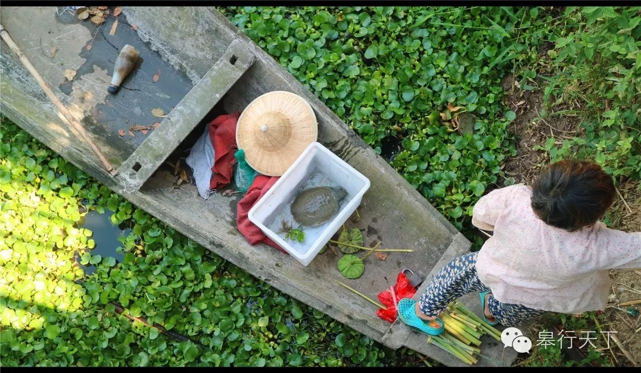 德清莫干山、下渚湖、新市古镇、杭州西湖游船、河坊街、太子湾公园休闲三日游