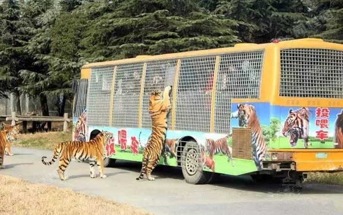 上海亲子二日游,野生植物园+玛雅水公园+陆地水族馆2日