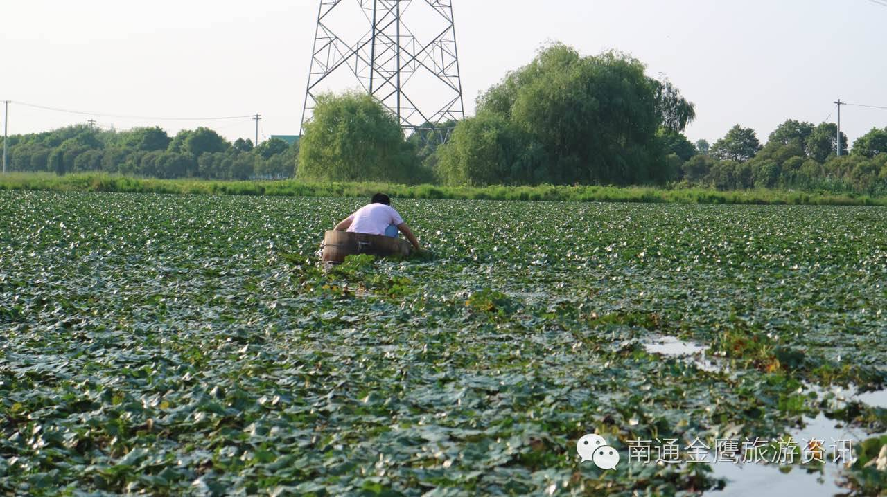 【9.16说走就走】泰州故乡农歌、采菱、溱潼古镇休闲自驾一日游