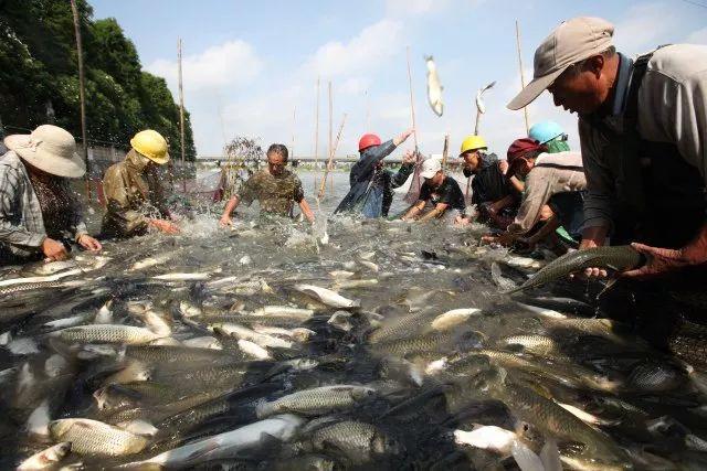 【泰州自驾1日游】逛古镇,品特色餐,观看捕鱼节,年货采集大过年
