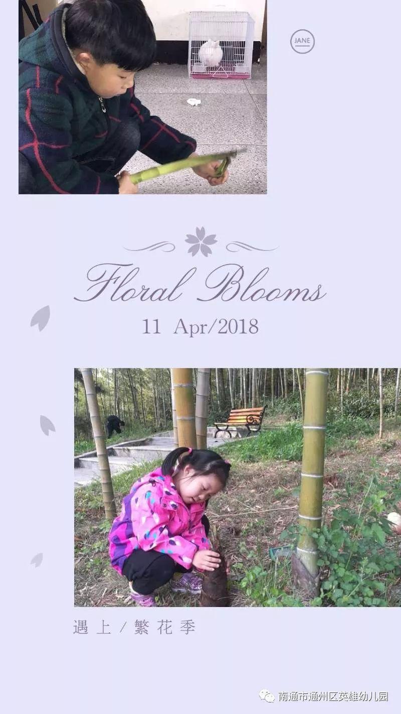 """春天的滋味 我晓得——好汉幼儿园春之旅""""品春""""运动"""