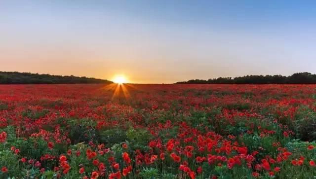 4月开端,新疆将酿成中国最美的中央!